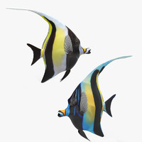 Moorish Idol Rigged Collection
