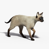 Siamese Cat(FUR)(ANIMATED)