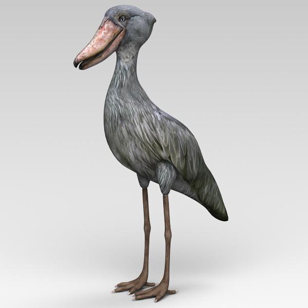 3d balaeniceps rex