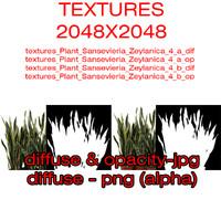 Textures Plant Sansevieria Zeylanica 4