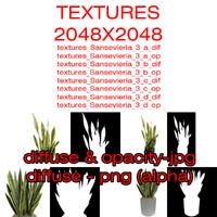 Textures Plant Sansevieria Zeylanica 3