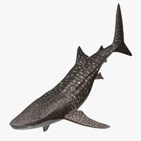 obj rhincodon typus whale shark