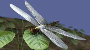 3d 3ds animations dragon fly