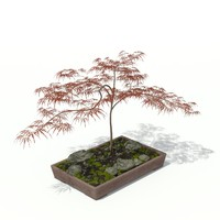 3d model maple acer palmatum bonsai