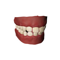 teeth gums 3d model