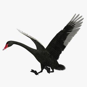 cygnus atratus black swan 3d obj