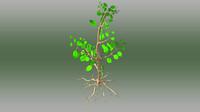 obj avicennia plants mangrove
