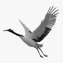 crane 3D models