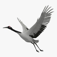 maya grus japonensis red crowned crane