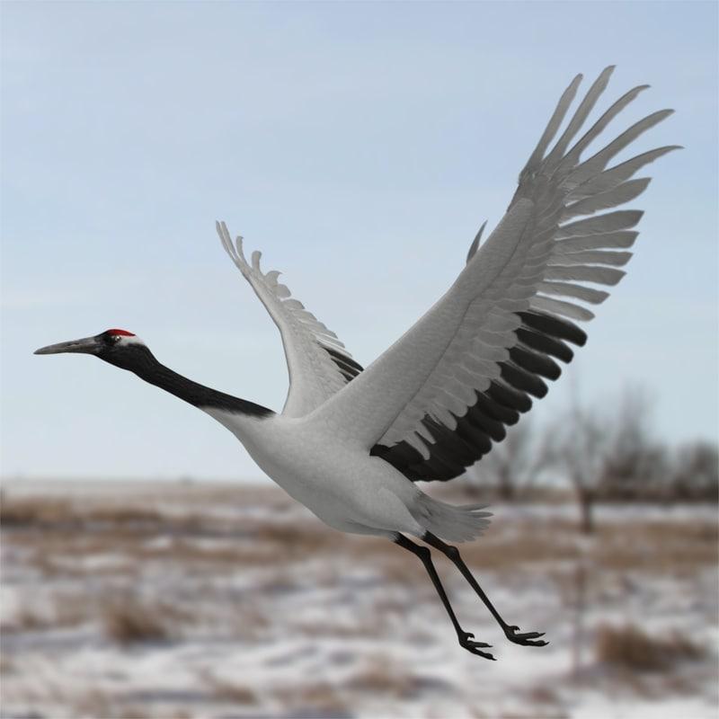 maya grus japonensis red-crowned crane