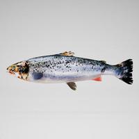 salmon 3ds