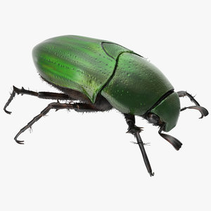 3ds max green scarab beetle