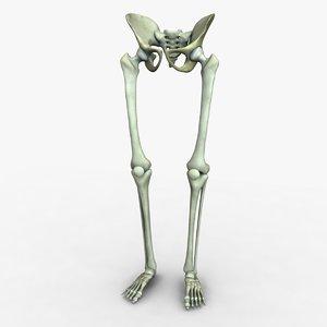 ma skeleton legs pelvis