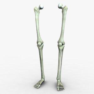 3d skeleton legs model