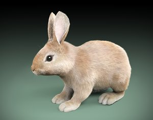 cartoon rabbit 3d model