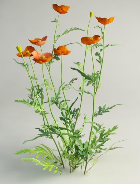 3d poppy flowers