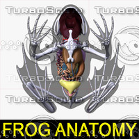 3ds frog anatomy body