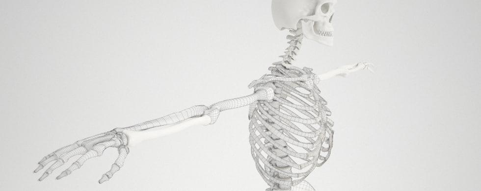 3d model human skeleton details