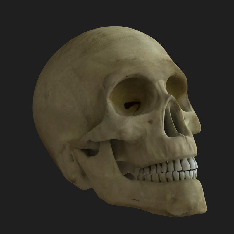 maya skull rigged