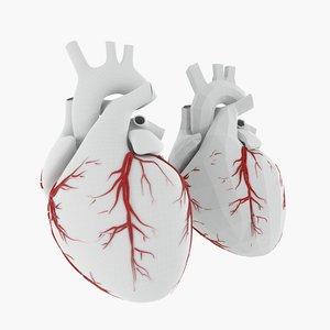 3d human heart base mesh model