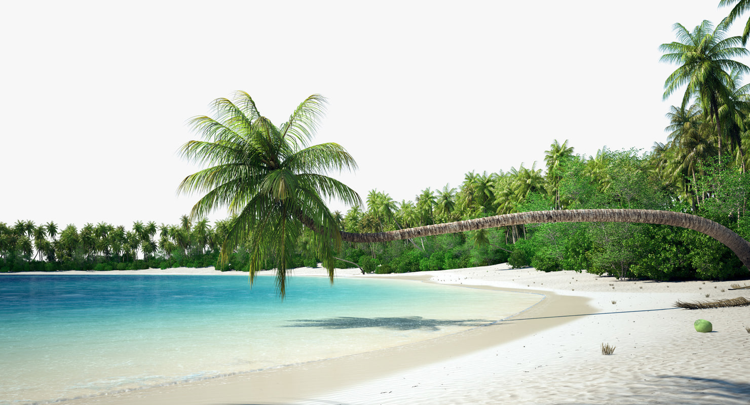 3d palm beach vegetation