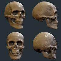 zbrush skull 3d model