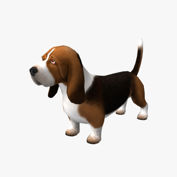 basset hound 3d model