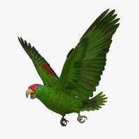 3d model amazona viridigenalis red-crowned amazon