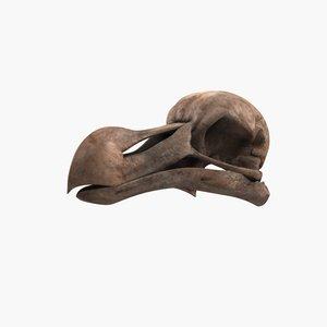 3d model dodo bird skull