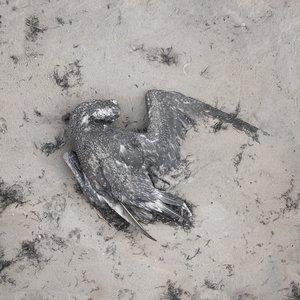 3ds max bird dead