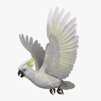 Cacatua Galerita 'Sulphur-crested Cockatoo Parrot'