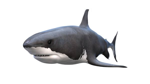 free shark great white 3d model