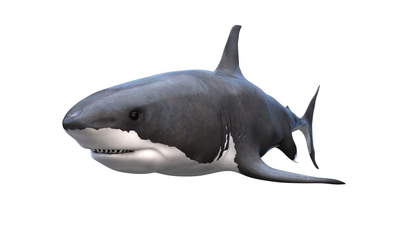 free shark great white 3d model