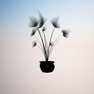 plant washingtonia filifera 3d 3ds