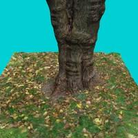 tree trunk 7 max
