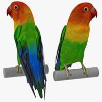 lovebird pose 3d model