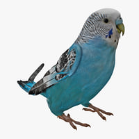 Budgerigar Rigged