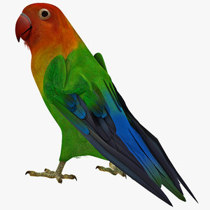 3d lovebird rigged model