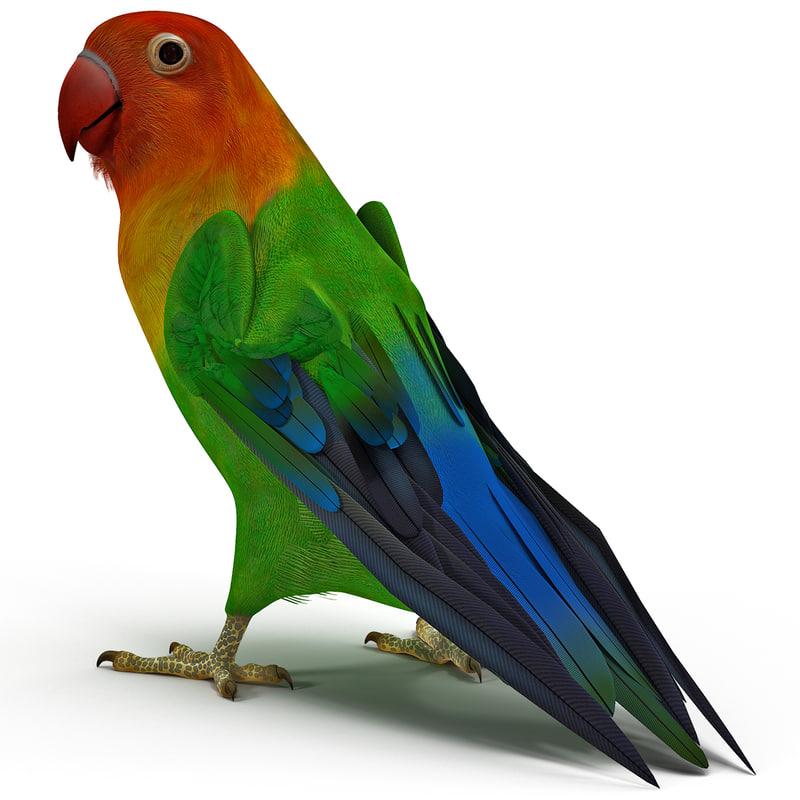 3d lovebird rigged model