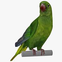 max parakeet rigged