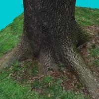 Tree Stump 6