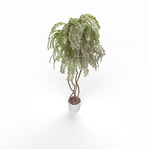 home plant max