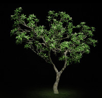 3d model hi resolution tree