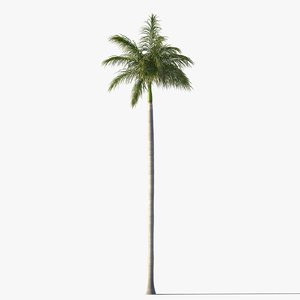 3d royal palm tree