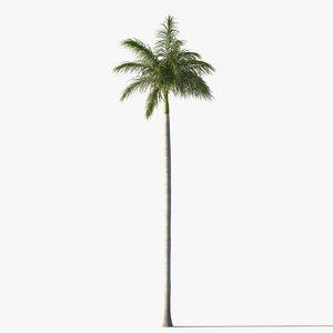 3d royal palm tree