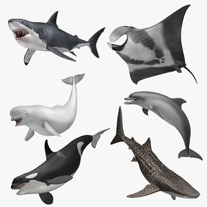 3d model aquatic animals