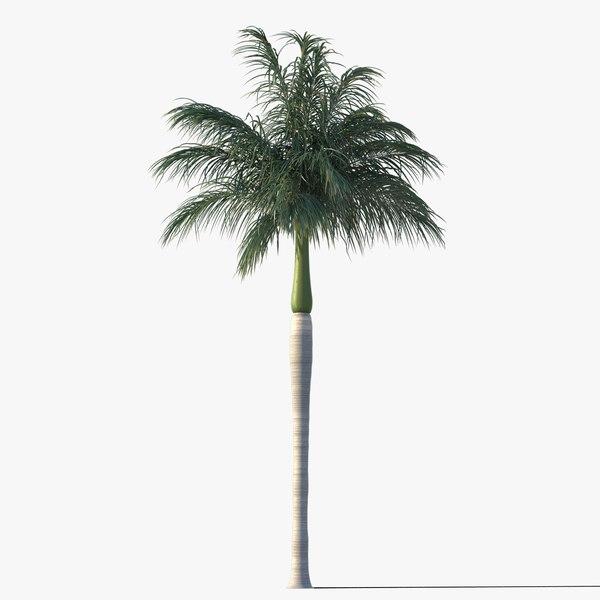 royal palm tree max