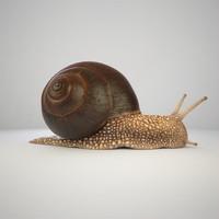max snail shell