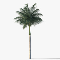 3ds max royal palm tree