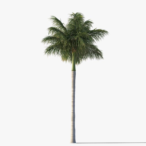 royal palm tree fbx